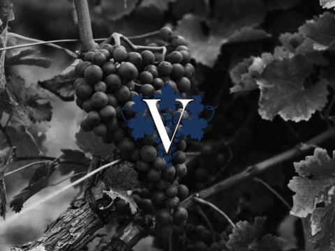 Сайт компании Virgo